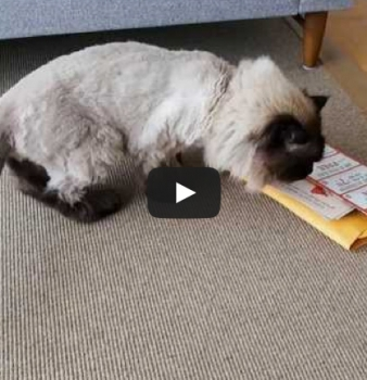 Bulk Cat Litter Warehouse<br>Catnip Mailer